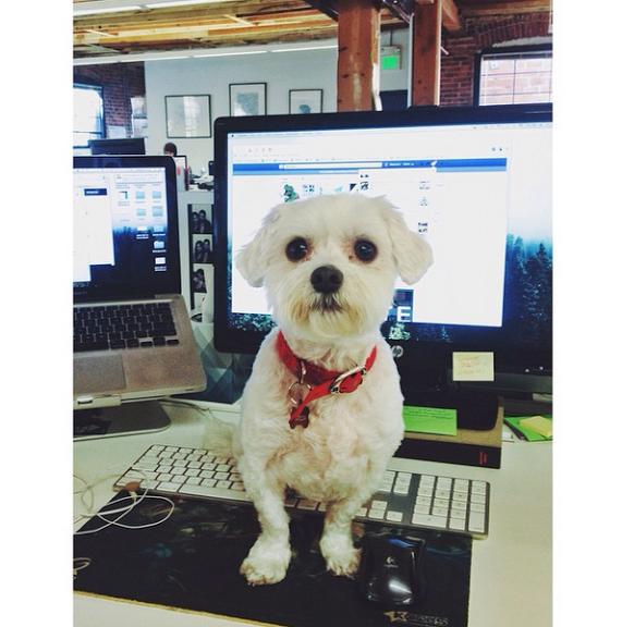 Matilda no escritório de São Francisco. (Foto: Reprodução / Instagram)