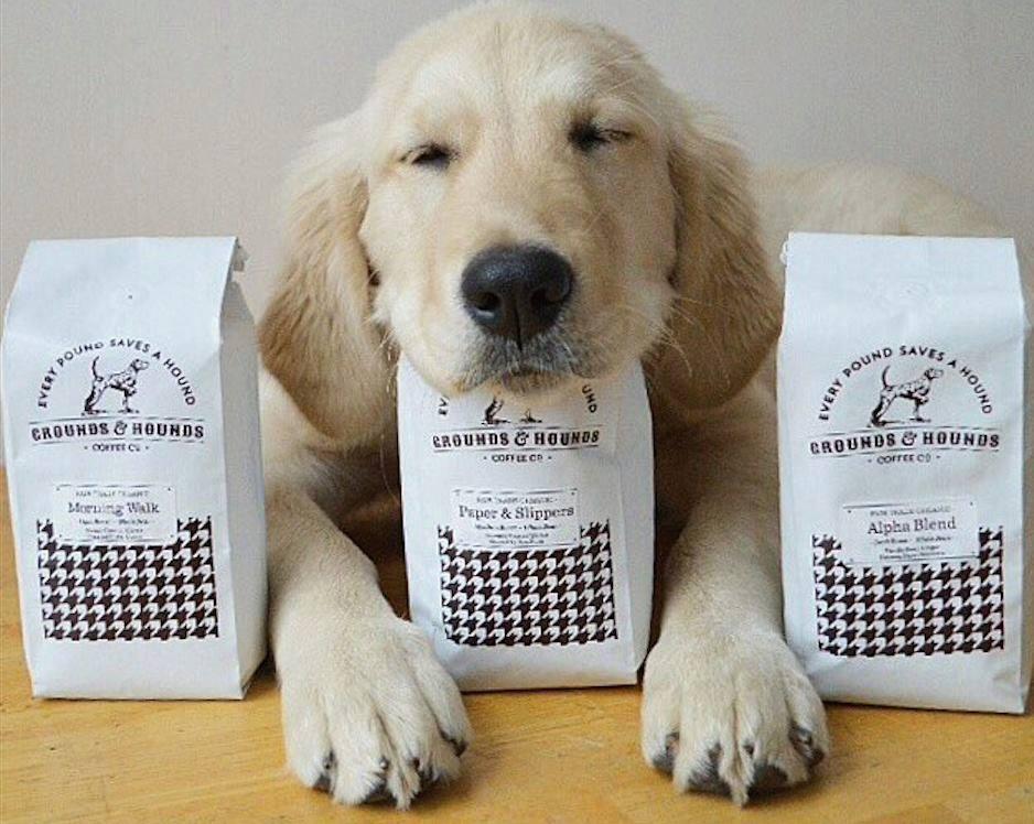 O objetivo é incentivar a adoção dos cães. (Foto: Reprodução / The Dog Cafe Site)