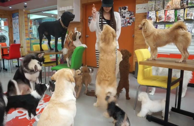 Sarah Wolfgang afirma que terão cachorros de todos os tamanhos. (Foto: Reprodução / The Dog Cafe Site)