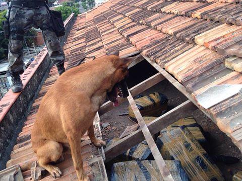 O cão Apolo localizou uma grande quantidade de maconha escondida. (Foto: Reprodução / Facebook / BAC)