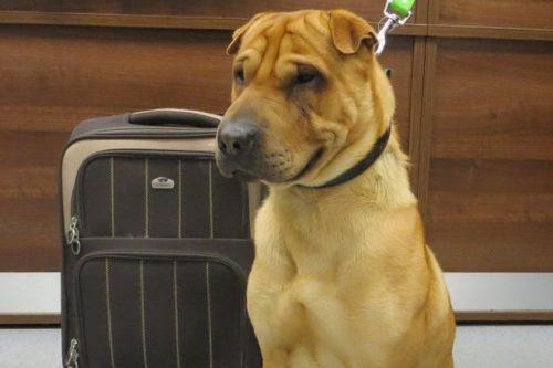 Foto: Scottish SPCA