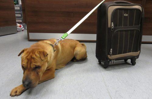 Kai foi encontrado com mala contendo seus pertences. Foto: Reprodução