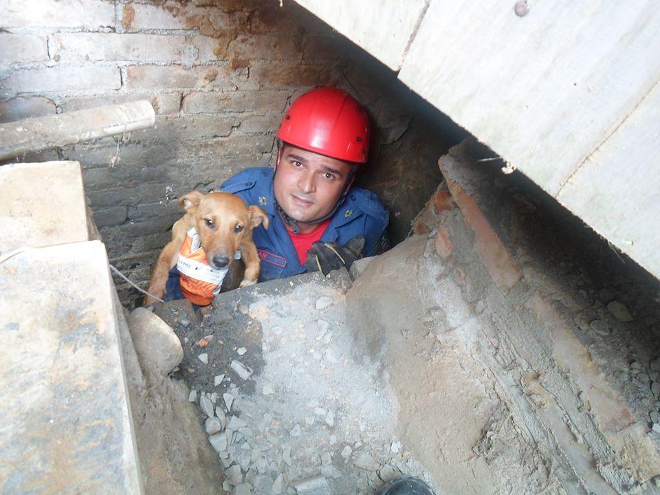 O bombeiro Jean Renato resgatando o cachorrinho do esgoto. (Foto: Reprodução / Facebook)