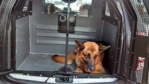 Ar-condicionado especial para o transporte dos cães policiais. (Foto: Reprodução / Facebook / BAC)