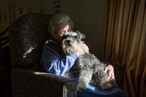 Cão de terapia na Nova Zelândia. Foto: Andrew Fladeboe