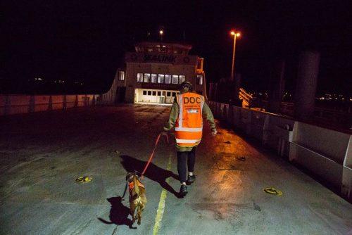 Cachorro trabalhando com biosegurança. Foto: Andrew Fladeboe