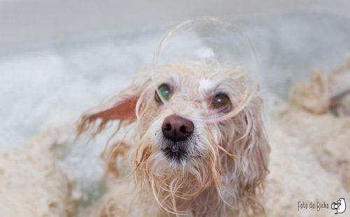 Bolha de sabão diverte cachorro durante o banho. (Foto: Marcelo Cabrera)