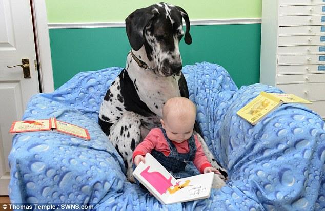 A gigante cachorra Harley e a pequena Isla são melhores amigas. (Foto: Reprodução / Daily Mail UK)