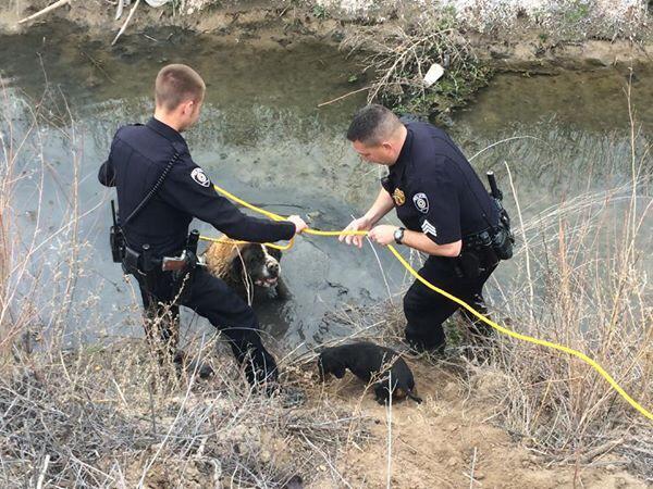 O cão Razor acompanhou o resgate de sua amiga Jazzy. (Foto: Reprodução / Facebook / Corpo de Bombeiros - Belen)
