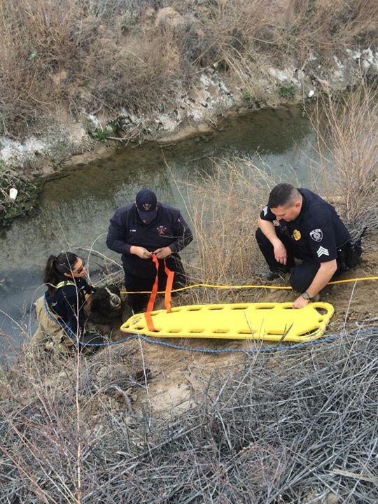 Os bombeiros utilizaram os mesmos equipamentos que são usados para fazer resgate de pessoas. (Foto: Reprodução / Facebook / Corpo de Bombeiros - Belen)