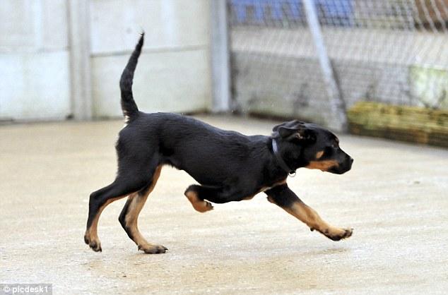 Ruby nasceu com uma deformação em uma das patas e precisou amputa-la. (Foto: Reprodução / Daily Mail UK)