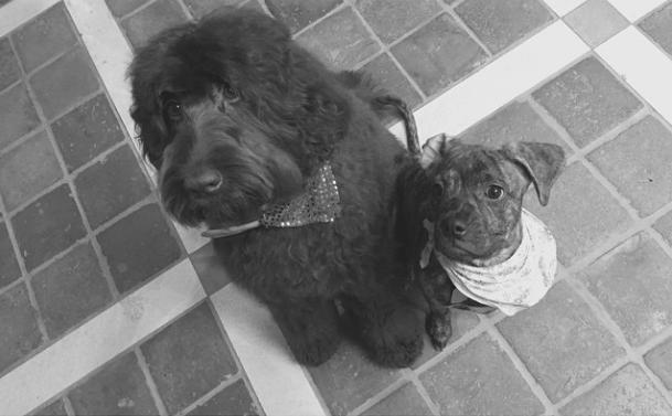 Ophelia e Cinnamon. (Foto: Reprodução / Instagram)