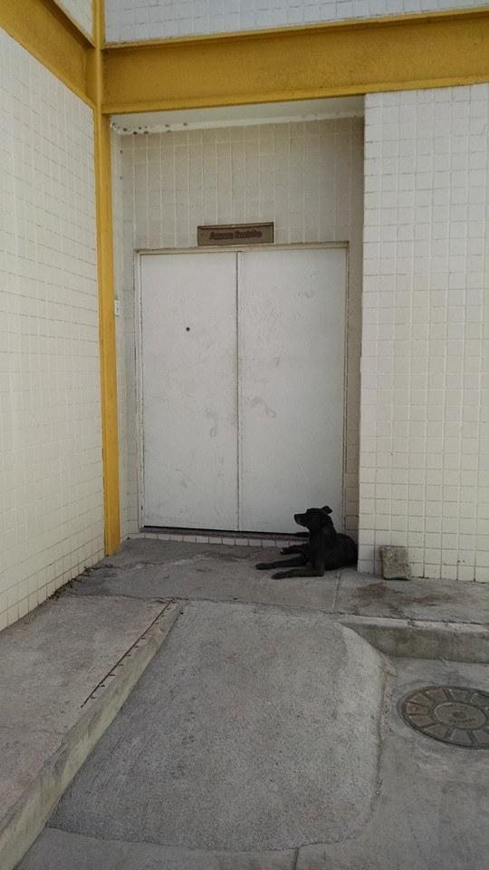 O cachorro acompanhou seu tutor na viatura da polícia e ficou na porta da carceragem. (Foto: Reprodução / Facebook / Patamos de Cabo Frio)