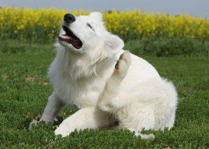 Cachorros também têm alergias. (Foto: Reprodução / Google)