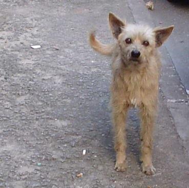 """O cachorro """"entregou"""" seu tutor para a polícia. (Foto: Reprodução / Facebook / Polícia Militar de Vitória da Conquista)"""