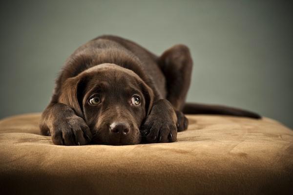 Os cães deixam de confiar em quem os engana. (Foto: Reprodução / Google)