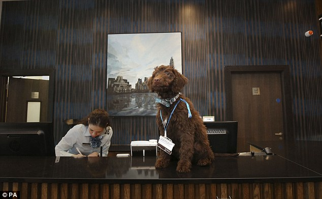 Waggers é o funcionário de quatro patas do hotel. (Foto: Reprodução / Daily Mail UK)