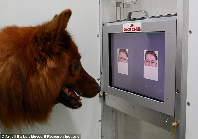 Os cachorros conseguem diferenciar rostos felizes dos bravos. (Foto: Reprodução / Daily Mail UK)
