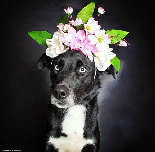 A cachorra Sasha, de quatro anos, já foi adotada. (Foto: Reprodução / Daily Mail UK)