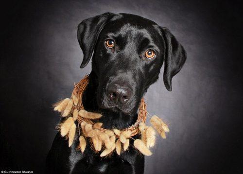 O cão Barkley tem dois anos e ainda espera sua vez. (Foto: Reprodução / Daily Mail UK)