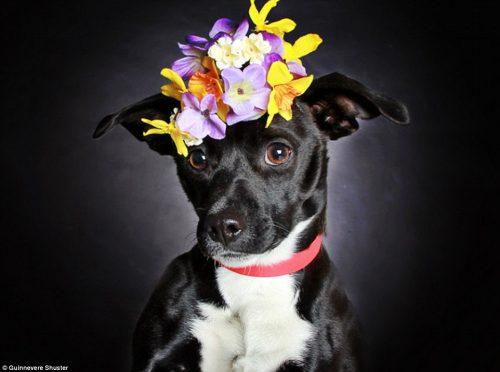 A cadela Homie tem ano e também conseguiu um lar. (Foto: Reprodução / Daily Mail UK)
