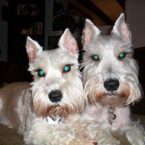 Sissy e Barney (Foto: Reprodução / Bark Post)