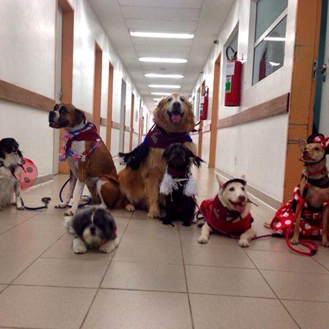 Equipe canina pronta pra diversão. (Foto: Reprodução / Facebook / Secretaria de Estado da Saúde de São Paulo)
