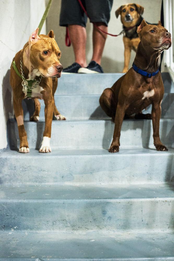 Dukes (esquerda), Ruby (direita) e Violet (ao fundo). (Foto: Reprodução / The Dodo / Zhenia Bulawka)