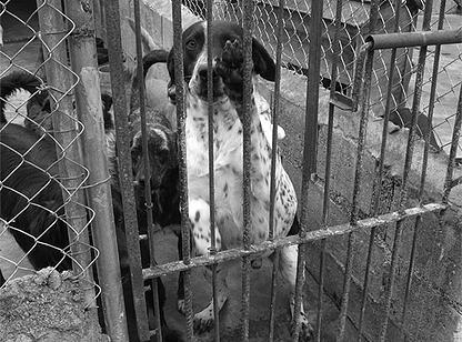 Muitos cachorros e gatos ainda precisam de ajuda. (Foto: Reprodução / Abeac)