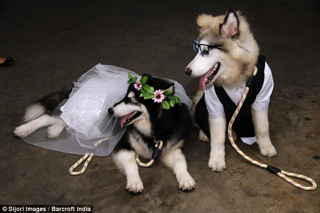 A noiva Yipa e o cão Buls se casaram. (Foto: Reprodução / Daily Mail UK)