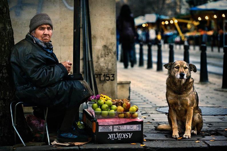 """3º lugar na categoria """"Melhor Amigo do Homem"""" - Denis Buchel da Bulgária (Foto: Reprodução / The Kennel Club)"""