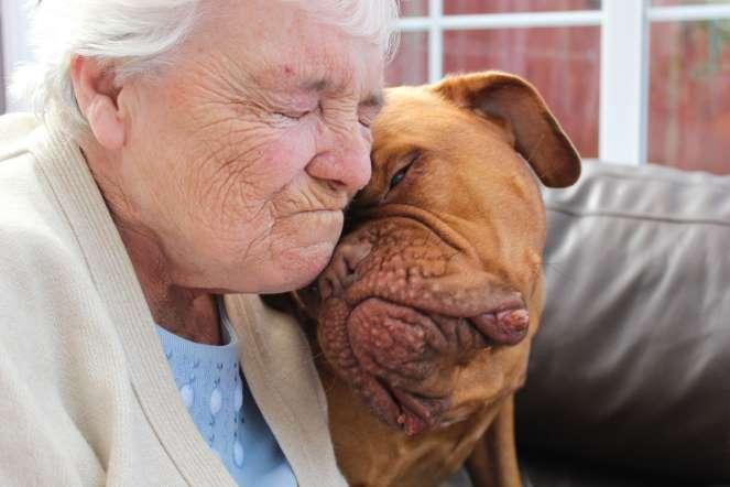 Menção honrosa - Emily Canham do Reino Unido (Foto: Reprodução / The Kennel Club)