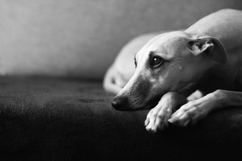 """1º lugar na categoria """"Retrato"""" - Grzegorz Gebik da Polônia (Foto: Reprodução / The Kennel Club)"""