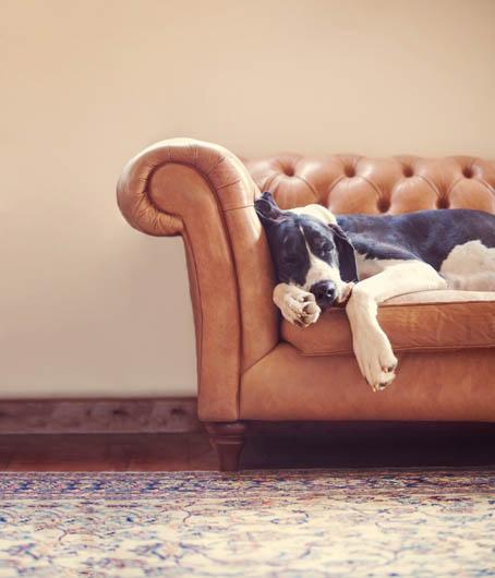 """2º lugar na categoria """"Retrato"""" - Alice Loder  do Reino Unido (Foto: Reprodução / The Kennel Club)"""