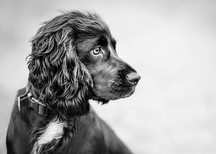 """3º lugar na categoria """"Retrato"""" - Dean Oseman do Reino Unido (Foto: Reprodução / The Kennel Club)"""