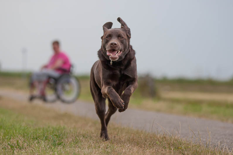 """1º lugar na categoria """"Cães de serviço"""" - Ruud Lauritsen da Holanda (Foto: Reprodução / The Kennel Club)"""