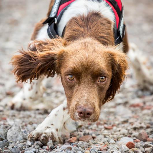 """2º lugar na categoria """"Cães de serviço"""" - Caroline Bridges do Reino Unido (Foto: Reprodução / The Kennel Club)"""