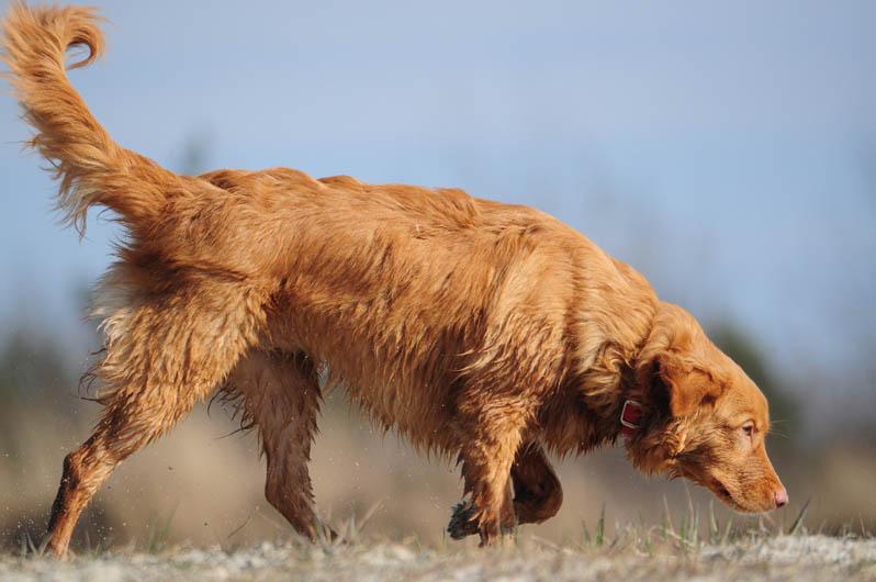 """2º lugar na categoria """"Cachorros no Trabalho"""" - Aleksandra Kaczor da Polônia (Foto: Reprodução / The Kennel Club)"""