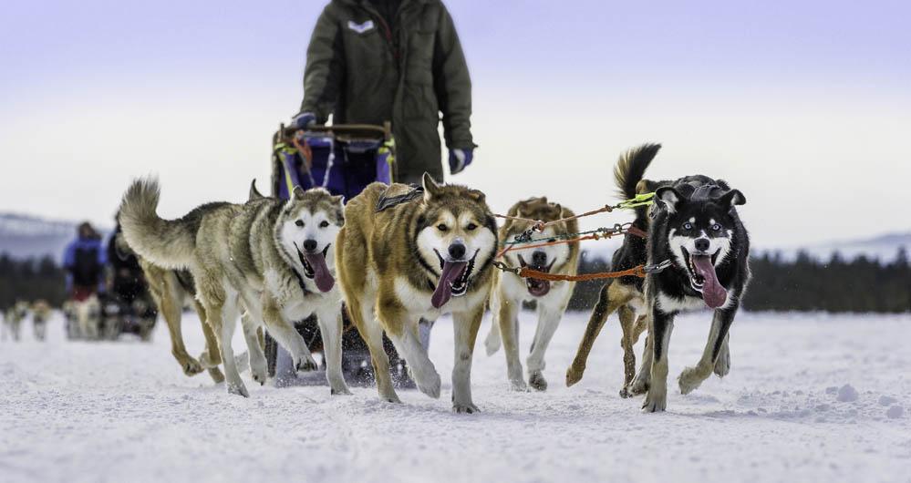 """3 º lugar na categoria """"Cachorros no Trabalho"""" -  Karsten Bidstrup da Dinamarca (Foto: Reprodução / The Kennel Club)"""