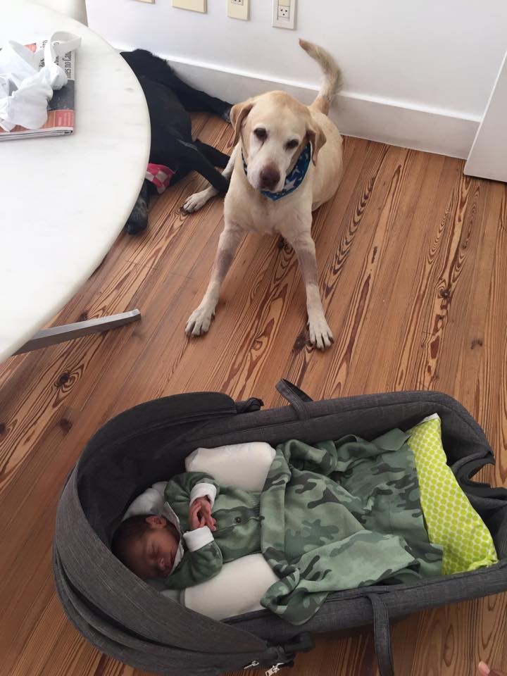 Marley tomando conta do bebê. (Foto: Reprodução / Facebook)
