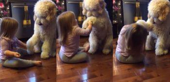 garotinha-cachorro-adestramento-fofo