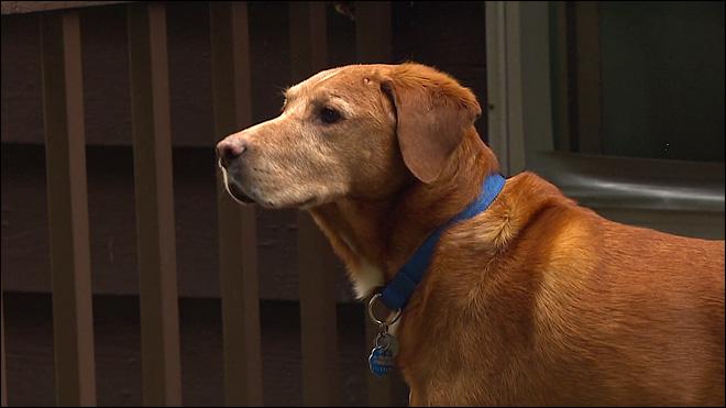 O cão fica dentro de casa. (Foto: Reprodução / Komo News)