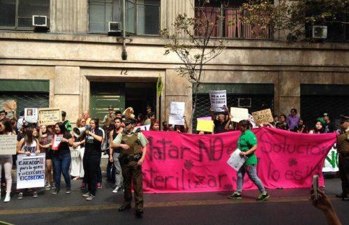 Foto: Reproduçãonoalacazade/perrosenchile.org