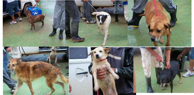 Cães resgatados. (Foto: Divulgação)