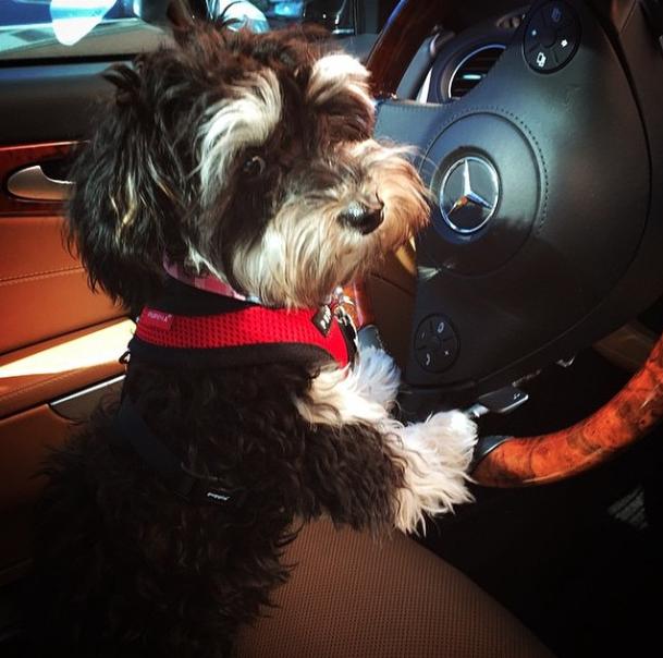 Carro de luxo. (Foto: Reprodução / Instagram / Rich Dogs Of Instagram)