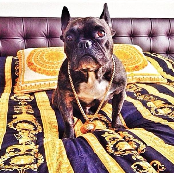 Joias. (Foto: Reprodução / Instagram / Rich Dogs Of Instagram)