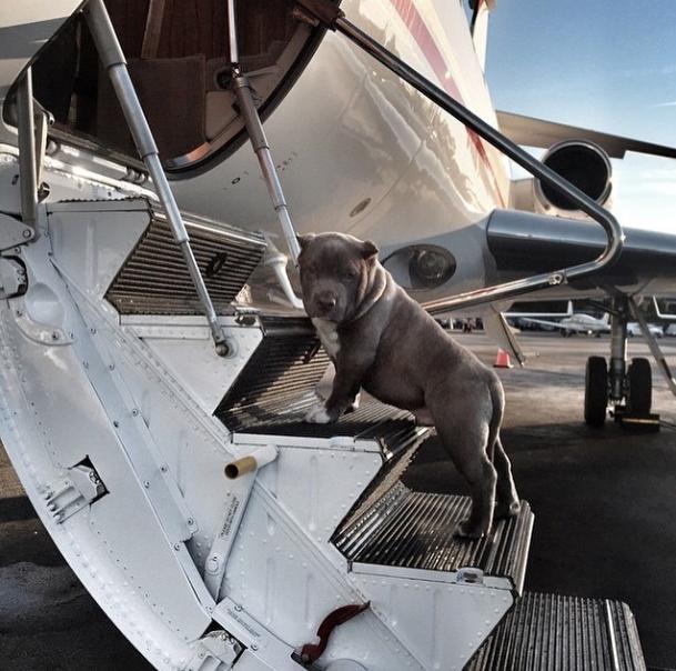 Jatinho particular. (Foto: Reprodução / Instagram / Rich Dogs Of Instagram)