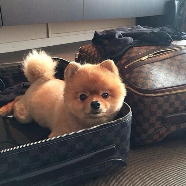 Arrumando as malas! (Foto: Reprodução / Instagram / Rich Dogs Of Instagram)