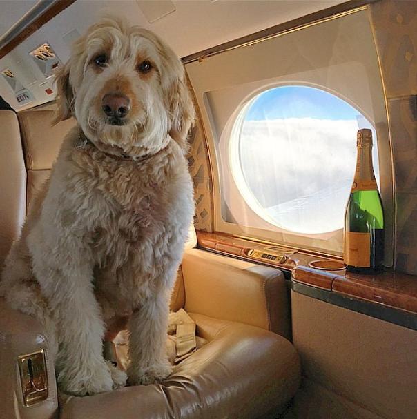 Viajando com muito conforto. (Foto: Reprodução / Instagram / Rich Dogs Of Instagram)