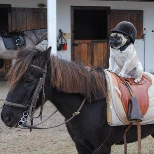 Passeio a cavalo. (Foto: Reprodução / Instagram / Rich Dogs Of Instagram)